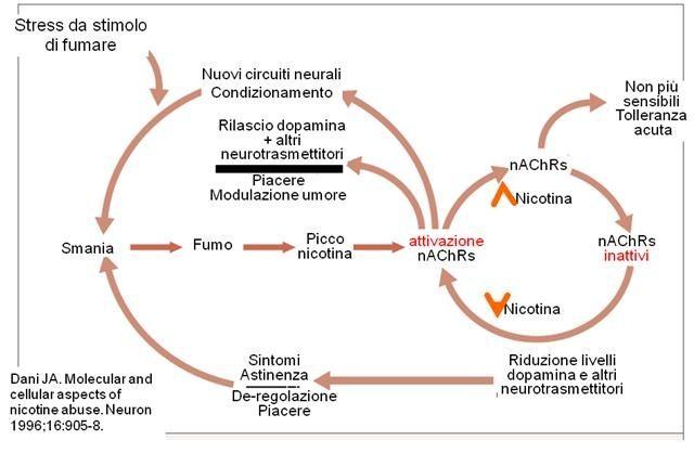 Potenzialità a cibo di diabete