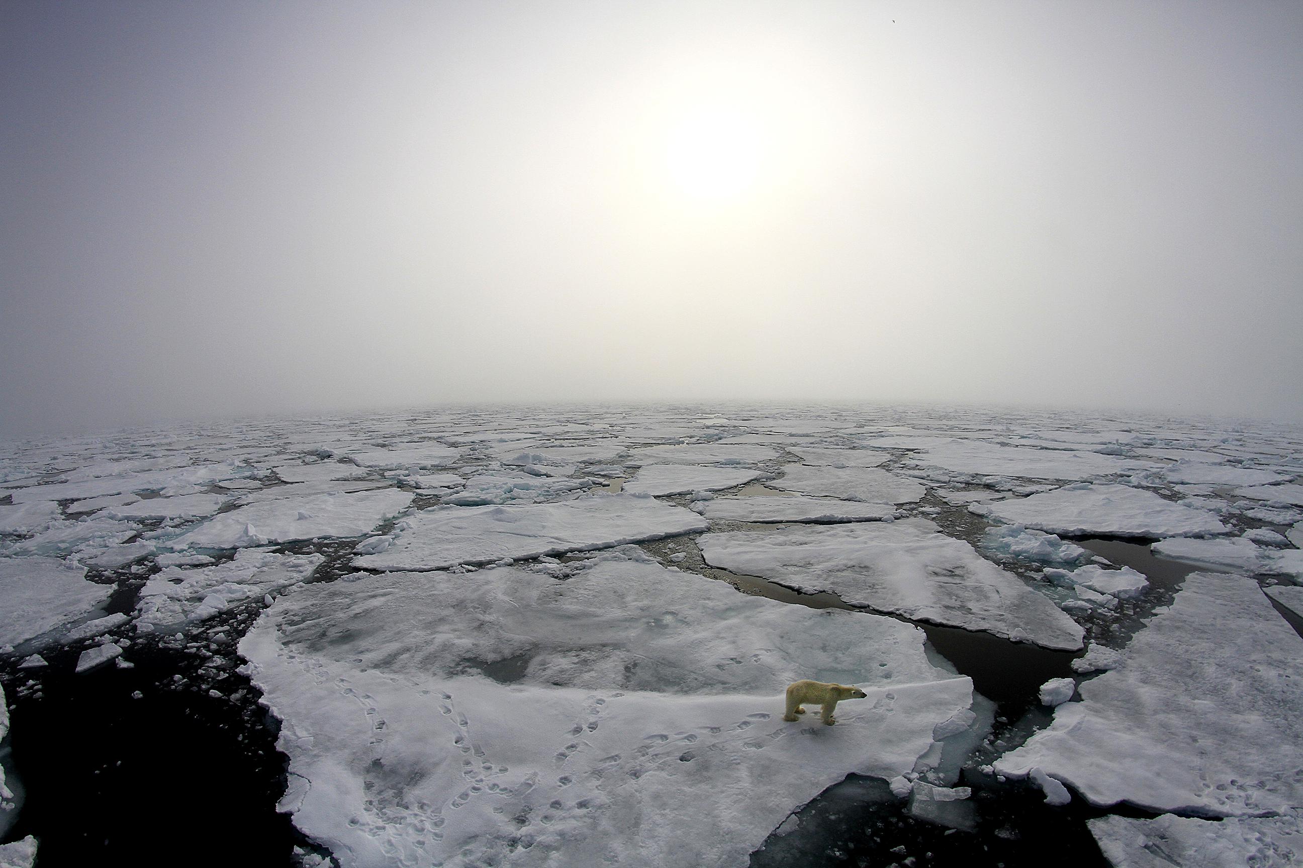 Un orso polare sulla superficie ghiacciata fratturata vicino alla nave della spedizione Norwegian Young Sea ICE. Credit: Marcos Porcires/Norwegian Polar Institute.