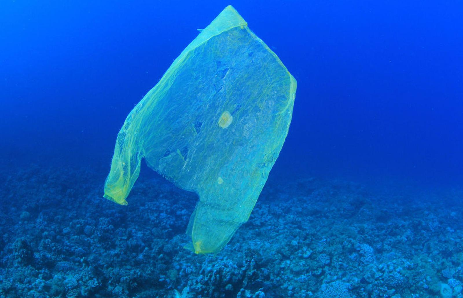 Plastic waste. Credit: MichaelisScientists / Wikimedia Commons. Licenza: CC BY-SA 4.0.