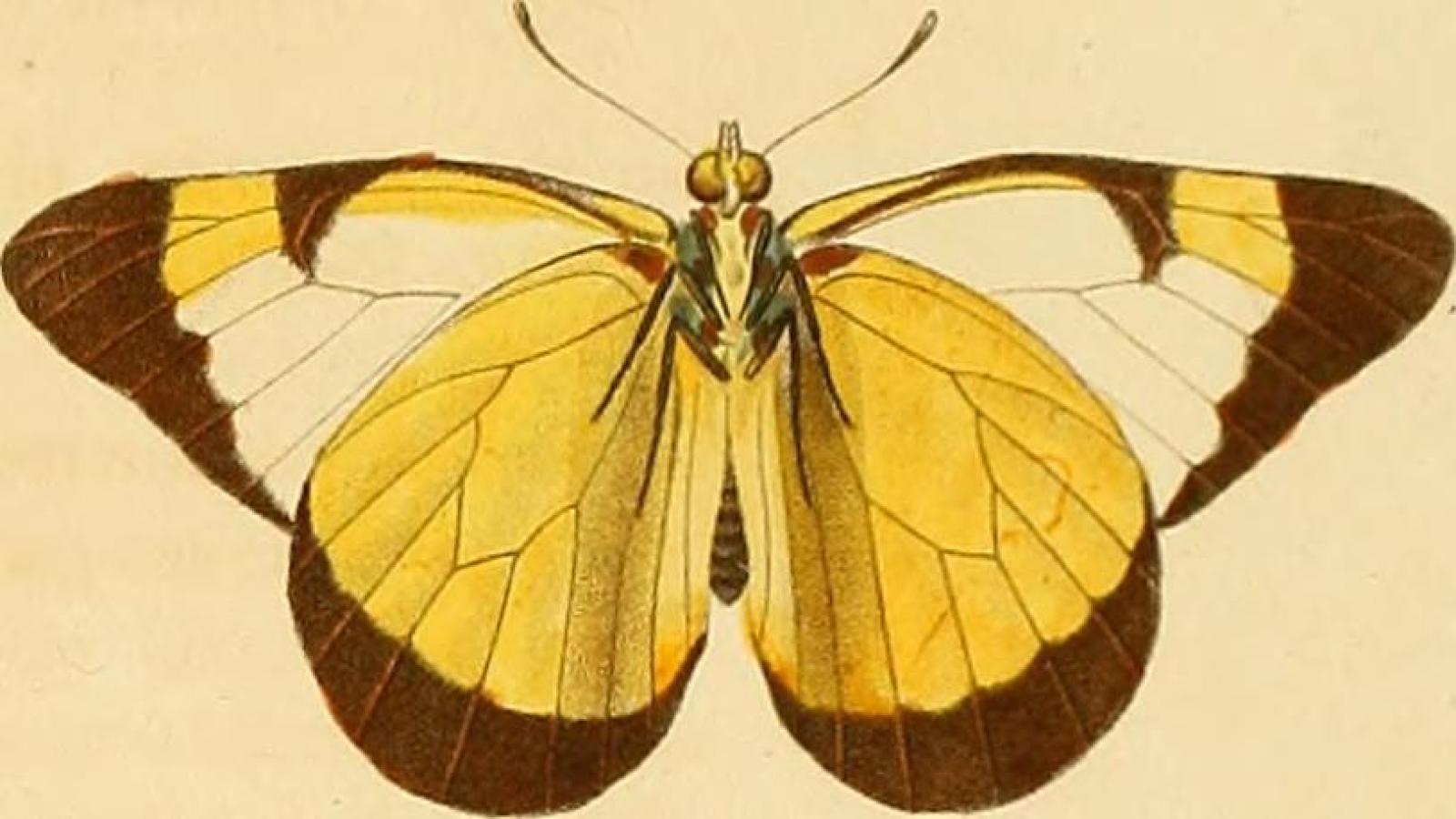 Un'immagine dal Recueil d'observations de zoologie et d'anatomie comparée. Crediti: Internet Archive Book Images/Flickr.