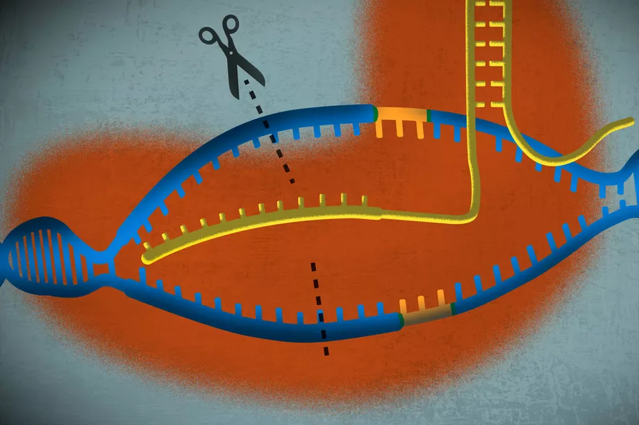 A simple guide to CRISPR, one of the biggest science stories of 2016. Credit: Javier Zarracina, Vox.