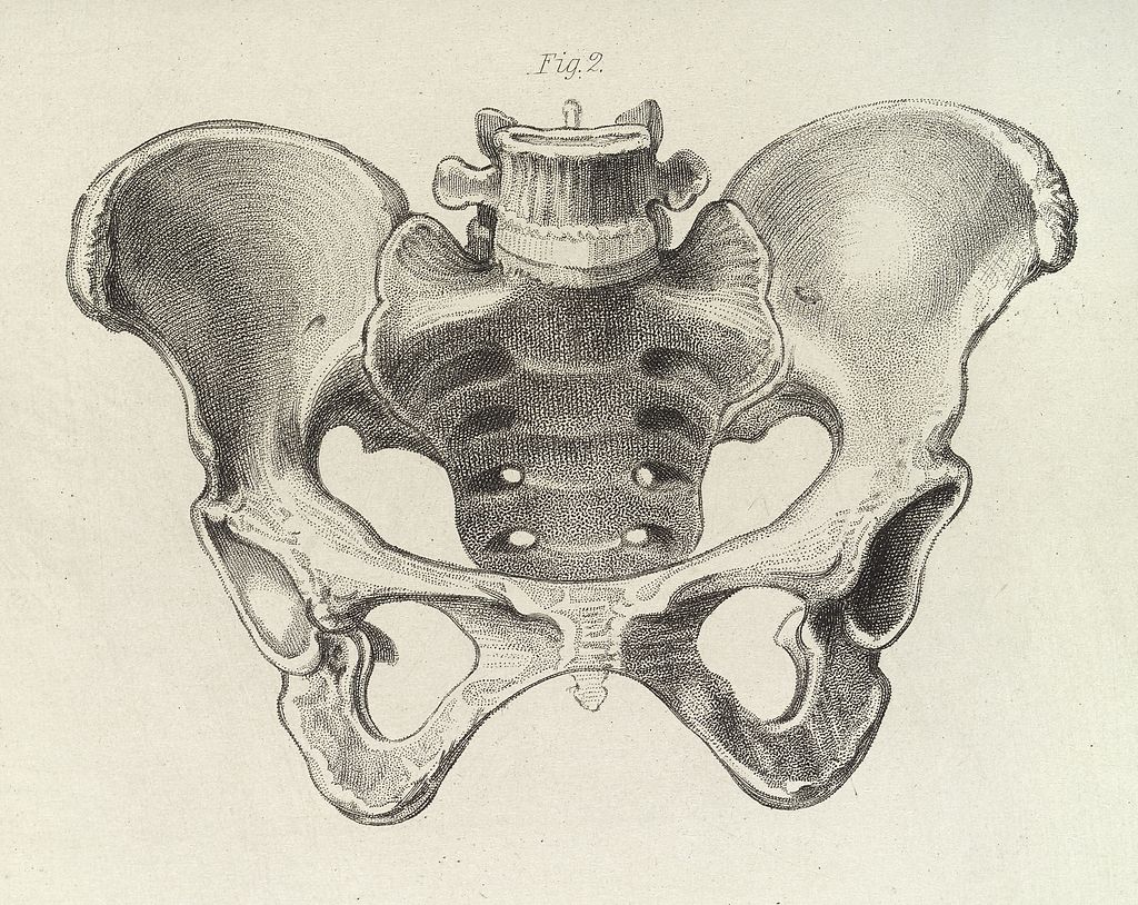 Uno schema della pelvi femminile. Incisione in un manuale di ostetricia. Credit: Wellcome Images / Wikipedia. Lincenza: CC BY 4.0.